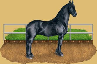 métier avec les chevaux