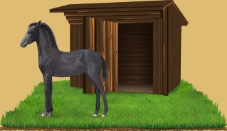 Les chevaux à l'abandon