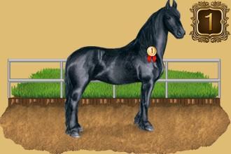 Classement des éleveurs de chevaux par jours de présence